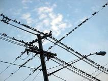 Birdsonwires